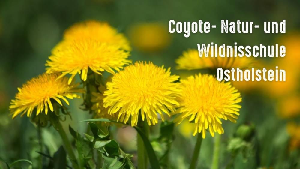 Coyote- Natur- und Wildnisschule Ostholstein