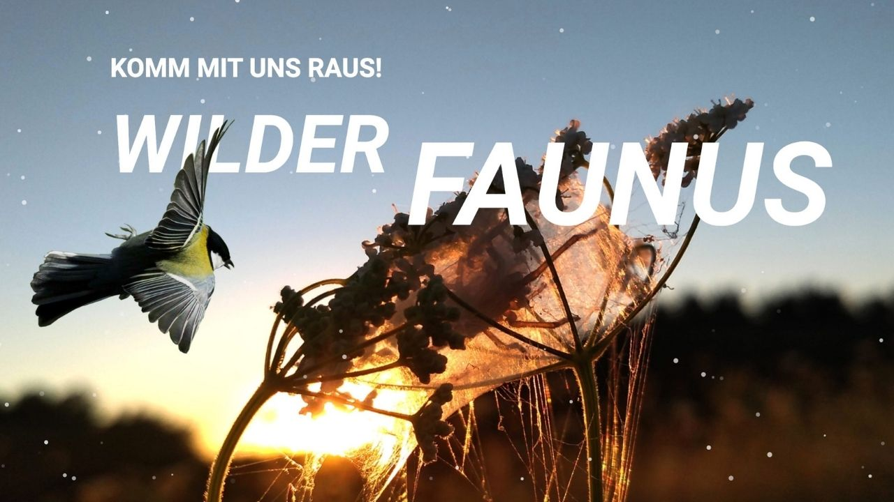 Wilder Faunus - Raus in die Natur